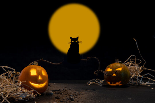 halloween background with pumpkin and black cat