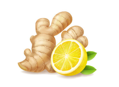 Lemon and ginger root isolated realistic illustration. Tea or lemonade ingredients
