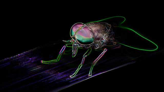 close up of a big horsefly with giant colorful faceted eyes, macro photography of this diptera insect on a black background, digital neon light effect, nature scene in the tropical jungle, Thailand