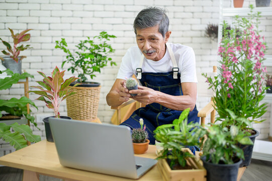 Senior man entrepreneur working with laptop presents houseplants during online live stream at home, selling online concept