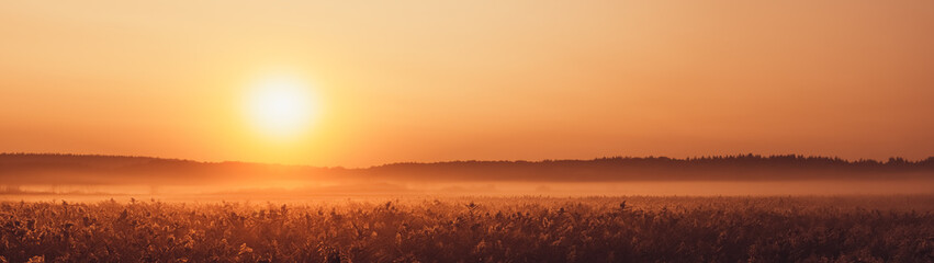 Sunrise and fog over plants autumn landscape panoramic