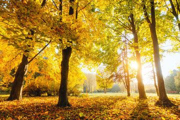 Wall Mural - Spectacular view of autumn trees in warm light. Location place Ukraine, Europe.