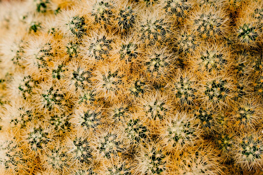 Close up abstract texture of cactus