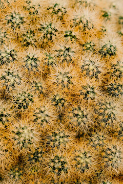 Closeup abstract texture of cactus