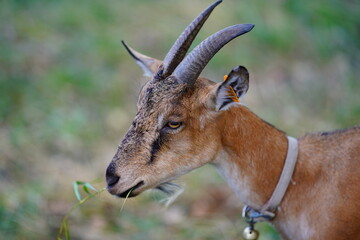 close up of a antelope