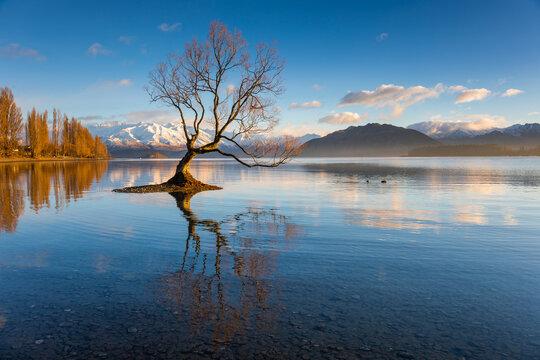 That Wanaka Tree, the lonely tree standing in Wanaka Lake, at sunrise, South Island, New Zealand