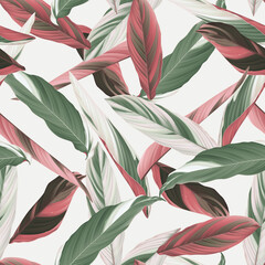 Foliage seamless pattern, heliconia Ctenanthe oppenheimiana plant on bright grey