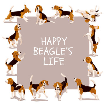 Happy beagle life vector card or poster with cute flat funny plaing puppys in various poses and action. Design for dogs lover