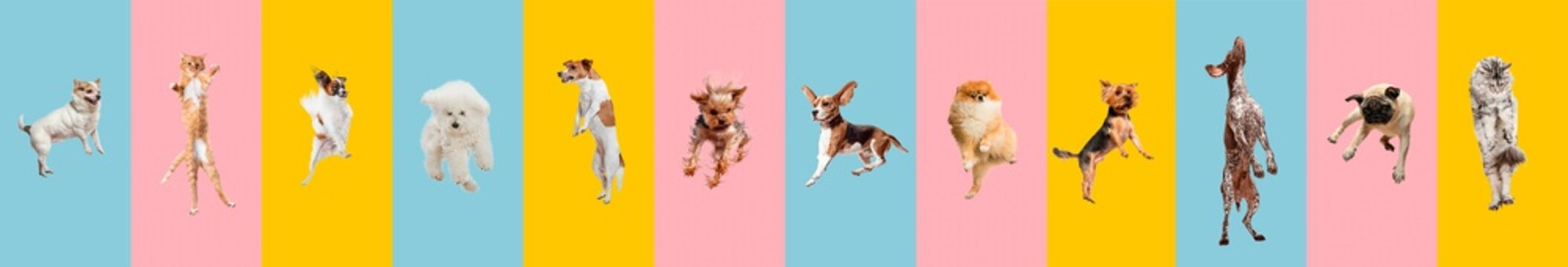 Cute dogs and cat jumping, playing, flying, looking happy isolated on colorful or gradient background. Studio. Creative collage of different breeds of dogs and one cat. Flyer for your ad, copyspace.