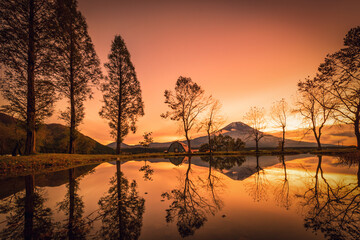 Mt. Fuji with big trees and lake at sunrise in Fujinomiya, Japan.