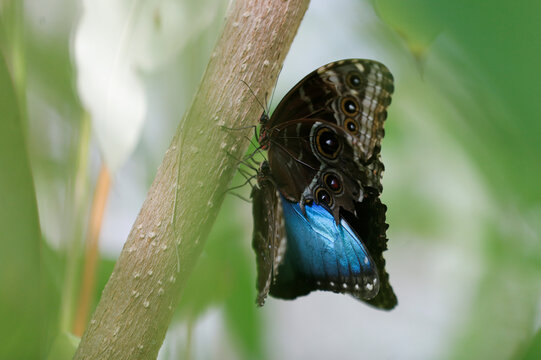 Butterflies are pictured at the Butterfly World in Stockton-on-Tees
