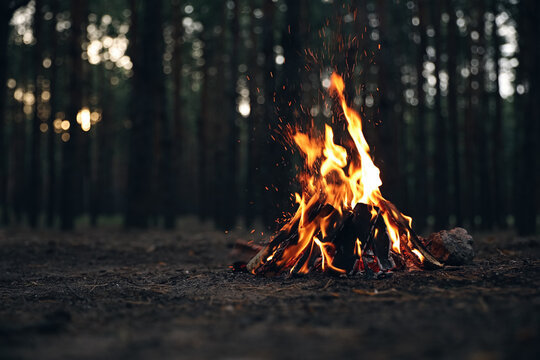 Beautiful bonfire with burning firewood in forest. Space for text