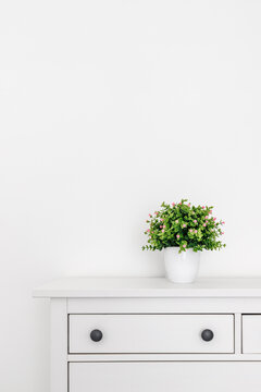 Green plant on a sideboard in front of a white wall. Minimalist scene.