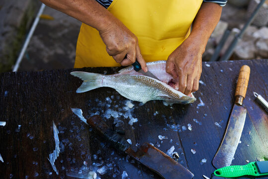 A worker cleaning and filleting a fresh caught saltwater striped bass fish..