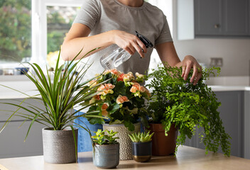 Close Up Of Woman Caring For And Watering House Plants With Spray