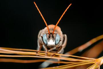 Fond de hotte en verre imprimé Papillon Beautiful Bee macro in green nature