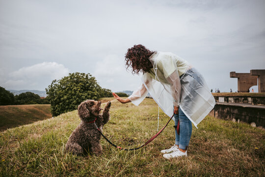 A young woman playing with her Spanish water dog in a rainy day in the north of Spain. The dog is raising its paw to its owner. Family dog lifestyle
