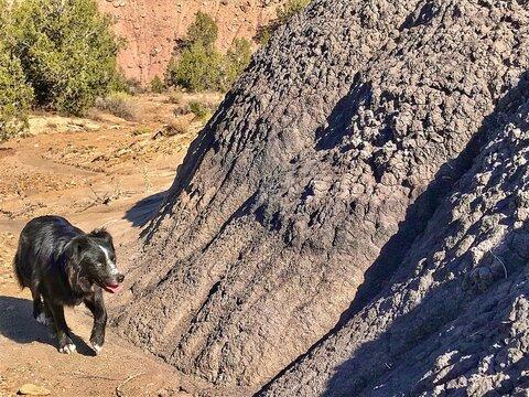 Dog walking by dune