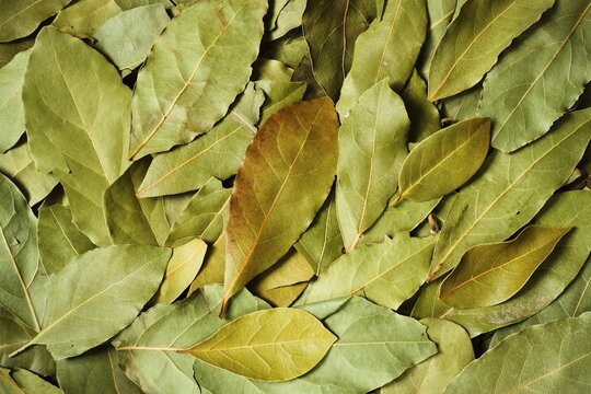 Dried aromatic bay leaves food texture background