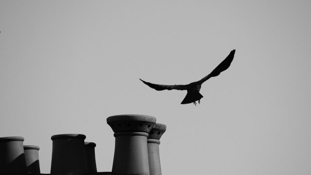 Black and white photo of a crow taking flight from on top of roof with chimney stacks nearvy