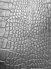 Background crocodile skin silver. The texture of natural crocodile leather in monochrome. Abstract background .