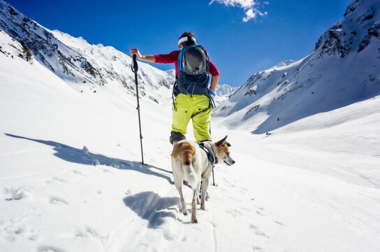 Female mountaineer ski touring only with her dog on a sunny day