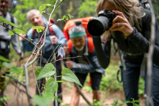 Hiking friends photographing flower in woods