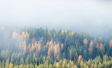 Foggy morning during autumn foliage at colorful taiga forest at Ruka fell, near Kuusamo, Northern Finland