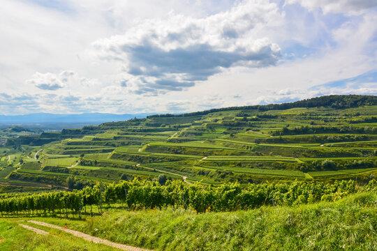 Weinbau im Kaiserstuhl / Baden-Württemberg / Deutschland