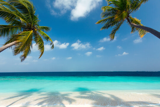 Tropical beach and palm trees, The Maldives, Indian Ocean