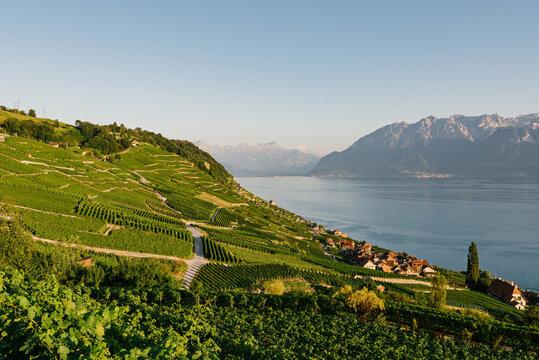 Vineyards on Lake Geneva Region