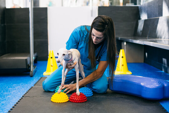Female vet and dog during rehabilitation session