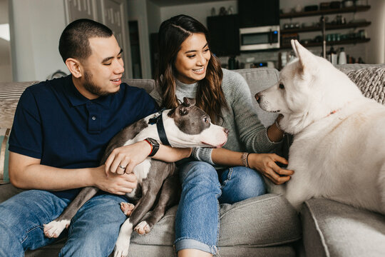 A couple in their house hanging out with their all white Akita and pit bull.