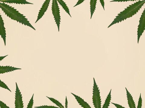 Cannabis Leaf Copy Space