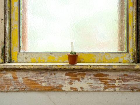 Succulent Plant in Window