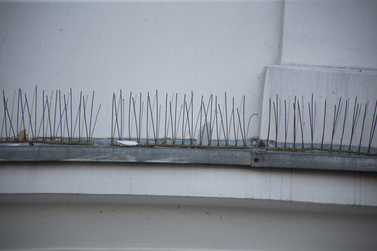 Bird control spike on the facade of a building in the city