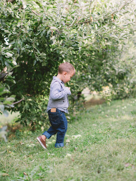 Exploring the Orchard