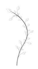 Fototapeta Vintage drawing of a branch with leaves in gray in vintage style on a white background