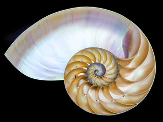 Detail of nautilus spiral shell isolated on black