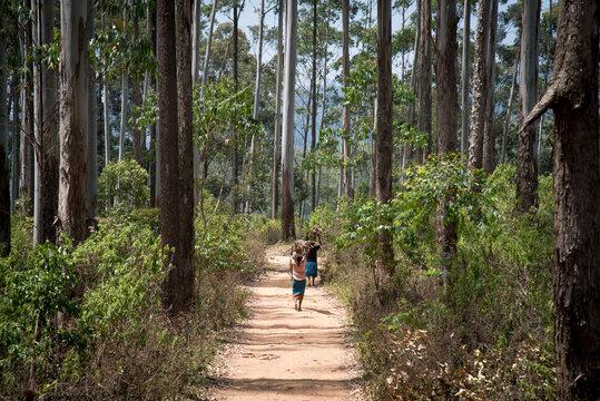 Sri Lanka Frauen tragen Holz