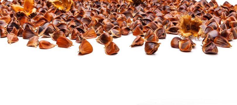 Bucheckern Nüsse von einem Buchenbaum