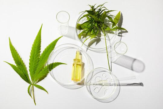Cbd htc canabbis oil in laboratory. Concept of medicine.