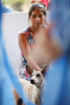 The dog of a woman from the indigenous Guajajara ethnic group looks on during an examination by members of the Brazilian Armed Forces veterinarian team in Urucu Jurua