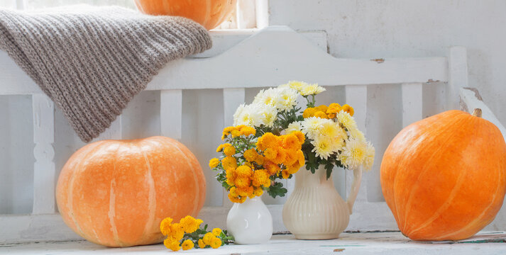 yellow chrysanthemums in jug and orange pumpkins  on old  white wooden bench