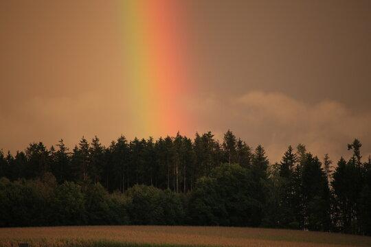 Regenbogen Rainbow Wald dunkel Farben Leuchten Abend atmosphärisch-optisches Phänomen