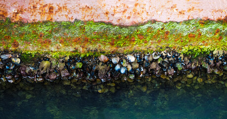Shellfish on the hull of the ship. Molluscs, overgrown ship bottom, panoramic view