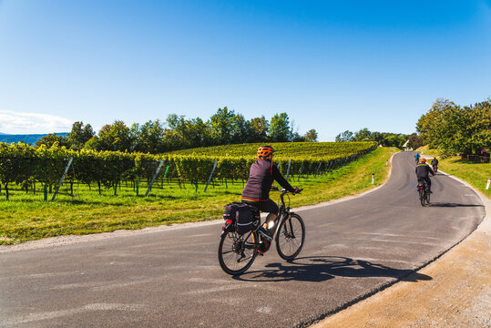 Cyclists on the wine route, riding along Austra - Slovenia border with grapevines fields in Autumn.