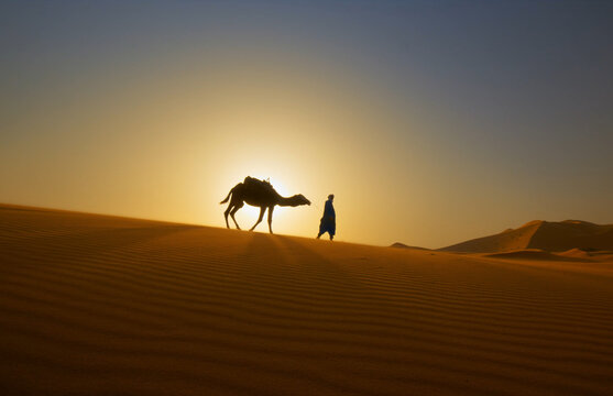 Sunset, sunrise, silhouette of the man who holds camels in the desert