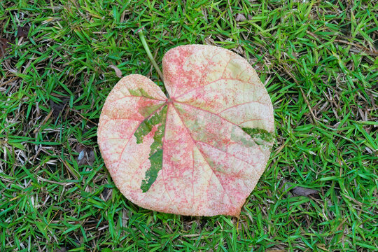 Colorful heart shaped leave on green grass.
