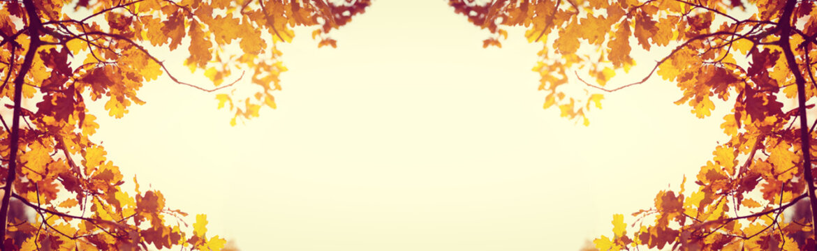 Yellow fall leaves of trees